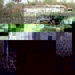 Шардарадан «шортан» ауламақ болған екеу жоғалды