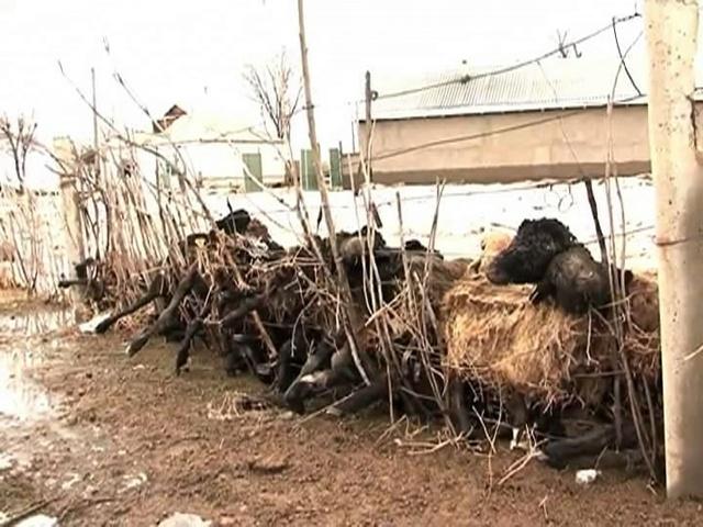 Сарыағаш ауданында 2008 жылы да дәл осындай апат болған еді