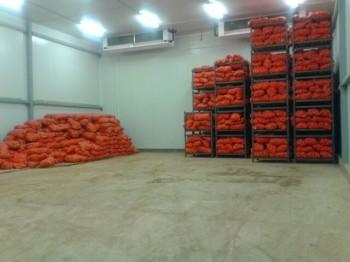 Мұнда қазір сырттан сатып алынған 600 тонна пияз сақталуда