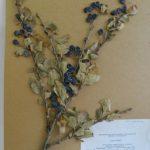 «Азаматтарға арналған үкімет» корпорациясында бірыңғай гербарий қоры құрылды