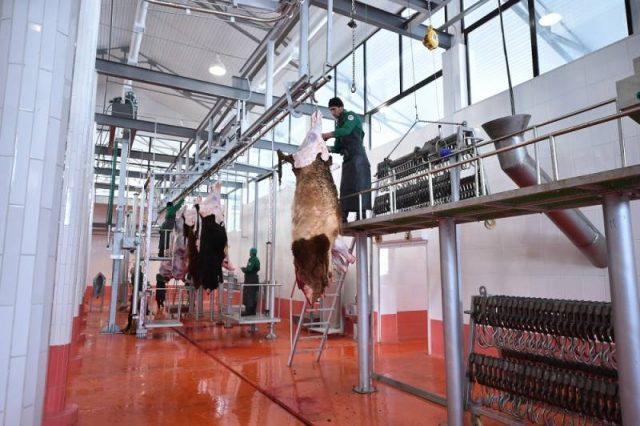 Оңтүстікте тәулігіне 60 тонна ет экспорттайтын комбинат ашылды