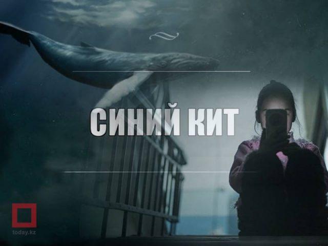 """""""Көк кит"""" ойыны Шымкентке жетті"""