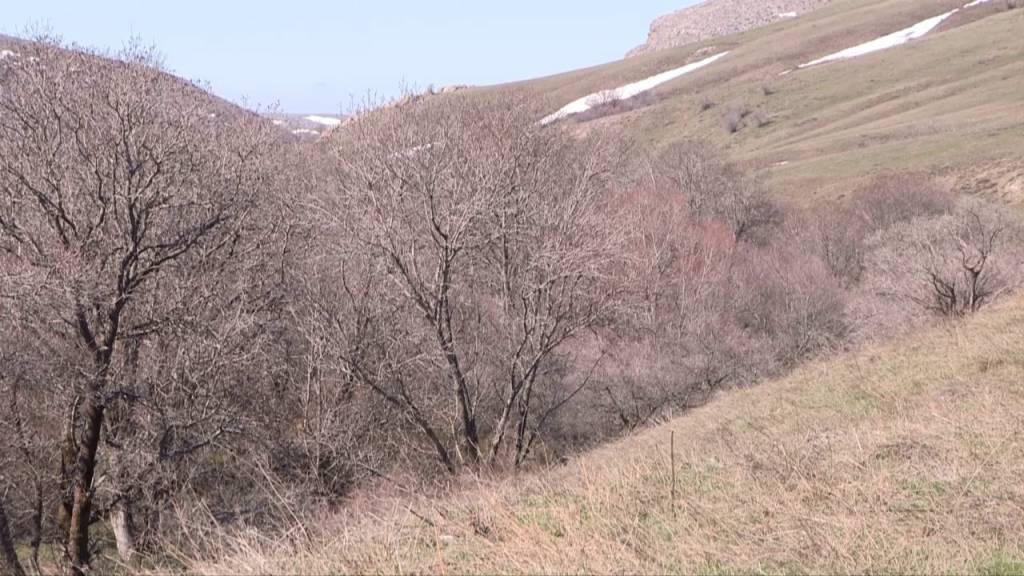 Боралдайдың бойында әлемдегі сирек ағаштар өседі